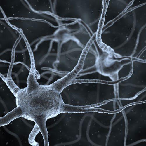 rm43 Neuroner